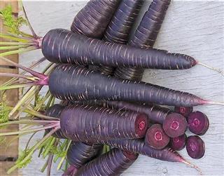 فروش کنسانتره هویج سیاه
